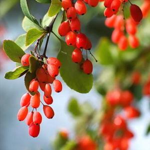 Чем убрать пятна от ягод